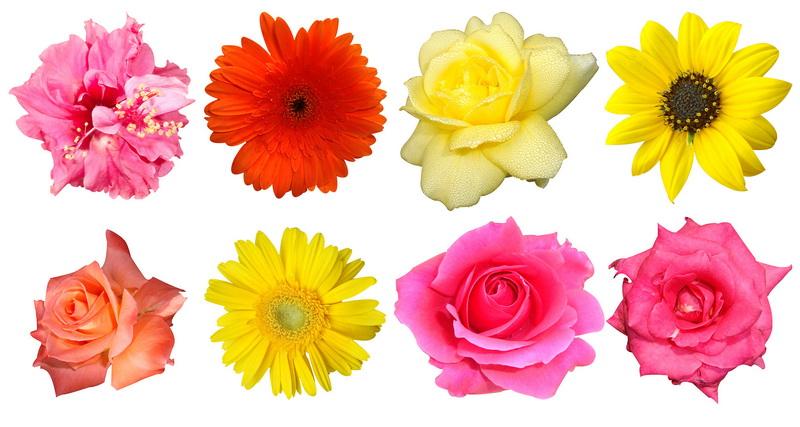 Почему выгодно купить искусственные цветы в интернет-магазине «Оптцветок» 2e1dfe5c9c5c2